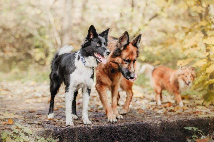 森の中で何かを見つめる3頭の犬