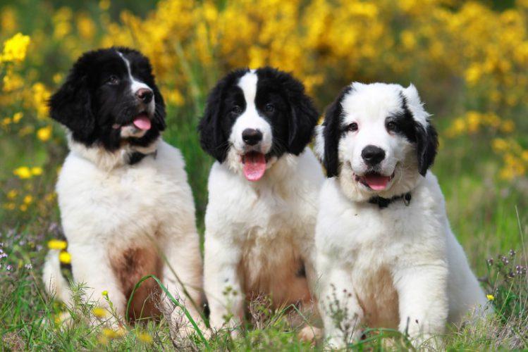 草むらで並ぶ3頭の犬