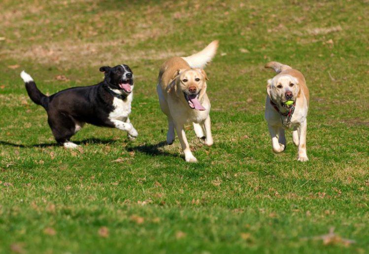 走る3頭の犬