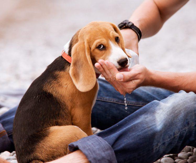 愛犬が自分に懐いてくれない意外な理由4つ