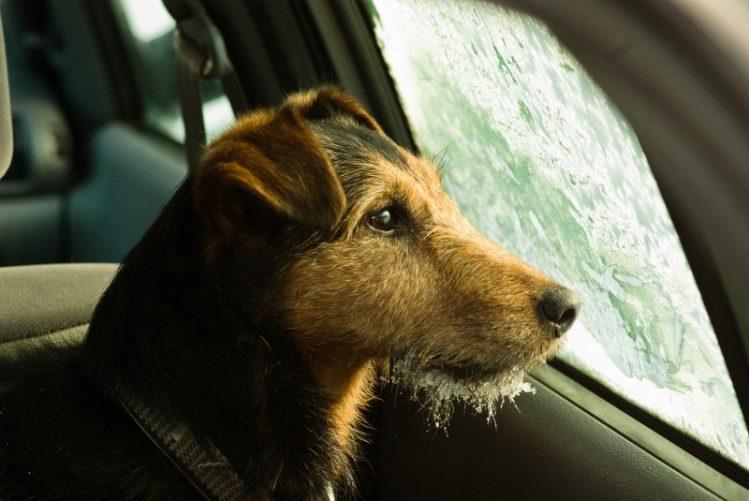 犬が車内から外を眺めている様子
