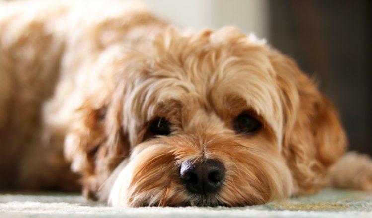 追いかけられるのは吉?「犬にまつわる夢」について