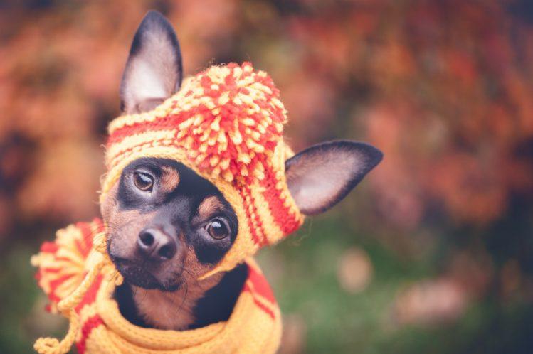 """愛犬は大丈夫?意外と多い""""NGな寒さ対策""""について"""
