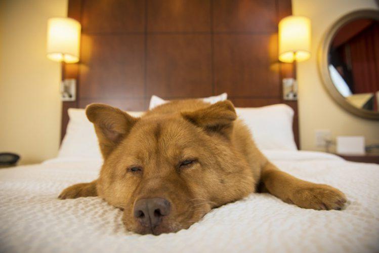 布団の上で犬が寝ている様子