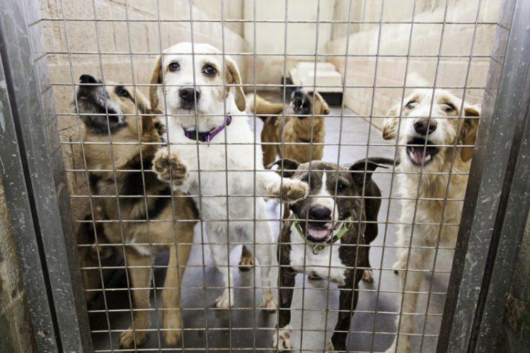 捨てられた犬達の現実