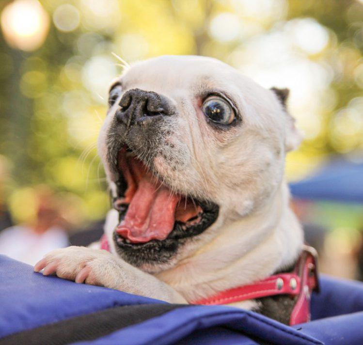 犬がワクワクしている時の犬語4選