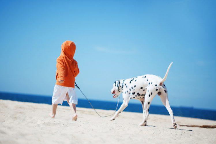 砂浜を散歩するダルメシアンと少年