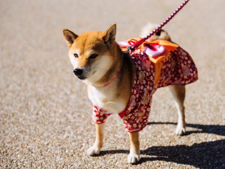 【都内】犬の和服を買えるお店3選