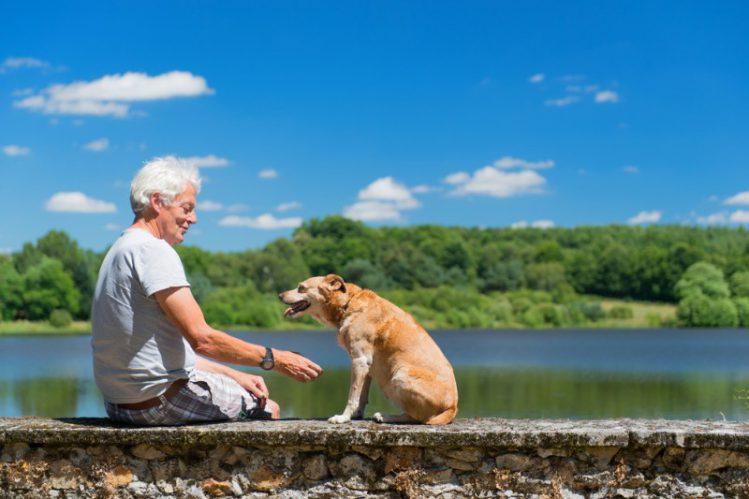 【シニア犬】あるある!愛しい老犬の行動まとめ