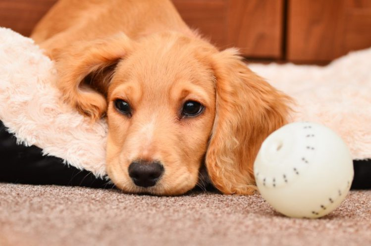 【研究結果】犬は嫉妬する?犬の感情について
