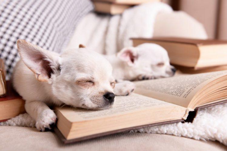 犬好きに読んでほしい小説6選