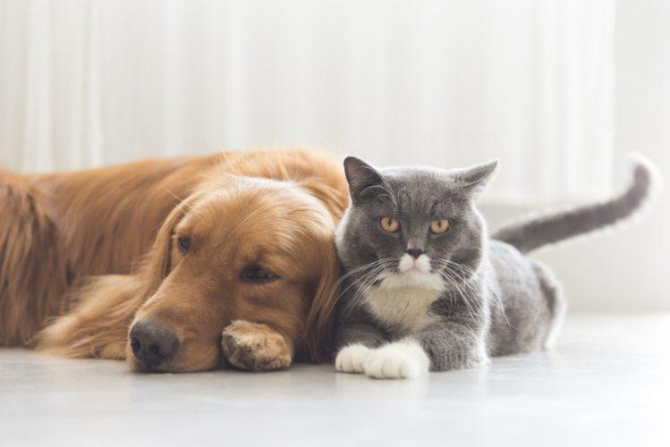 犬は留守番の時なにしてる?ペット監視アプリ3選