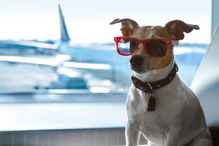 飛行機に搭乗可能なペットについて