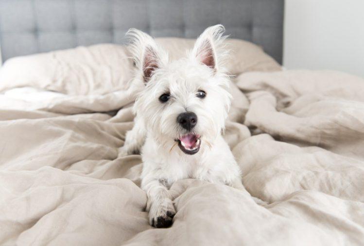 犬が寝室を好む理由とは?