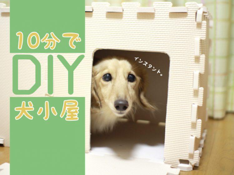 【🐶わんこインDIY】10分で作れる犬用ハウス(犬小屋)に挑戦!
