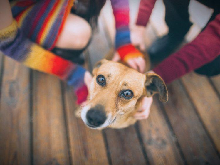 【行政書士が解説】Q.「夫婦で可愛がっていたペット、離婚後に自分が引き取りたい場合どうすればいい?」