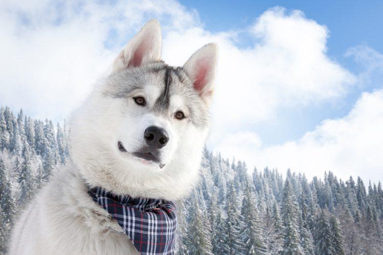 犬OKなゲレンデ!愛犬と一緒に雪原を駆け回ろう