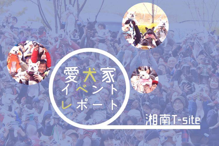 フレブル130匹以上が集結!?湘南Tサイトの愛犬家イベント「第10回ワンOne day!」へ行ってきました!