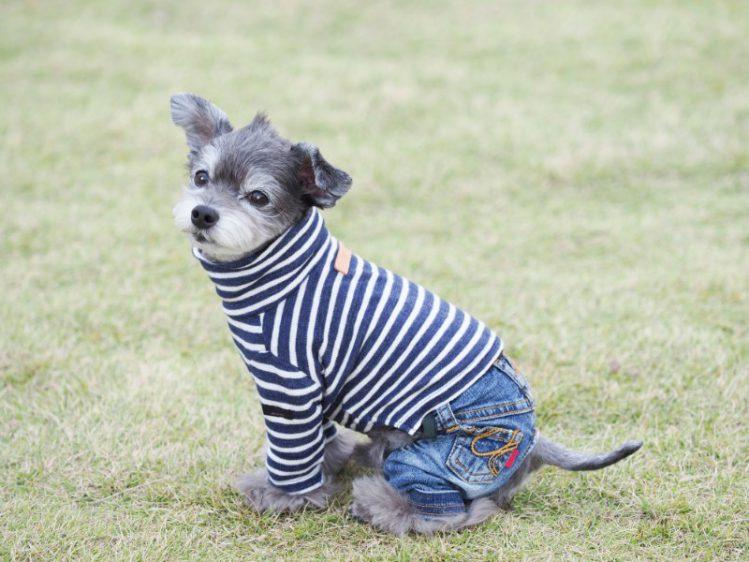 お洒落な服を着て座っているミックス犬