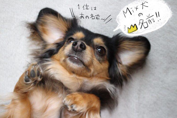2017年生まれミックス犬の名前ランキング!【男の子&女の子編】【アニコム調べ】