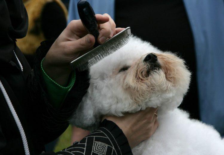 【プロが教える】犬用ブラシの選び方