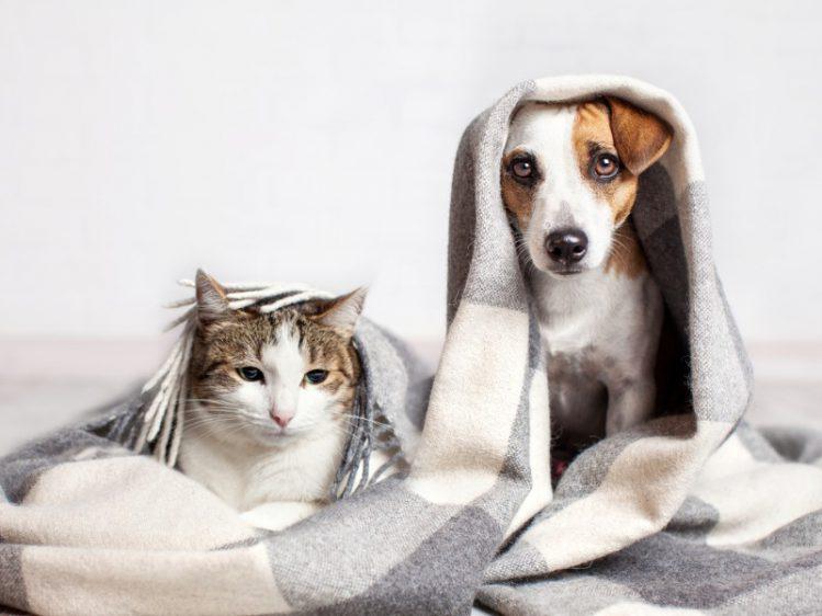 カットは要注意!犬と猫のヒゲの重要性について