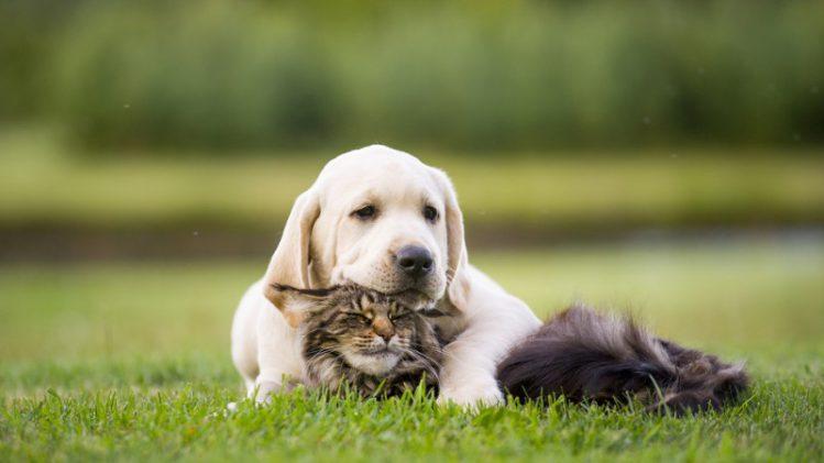 猫も犬のように散歩が必要?