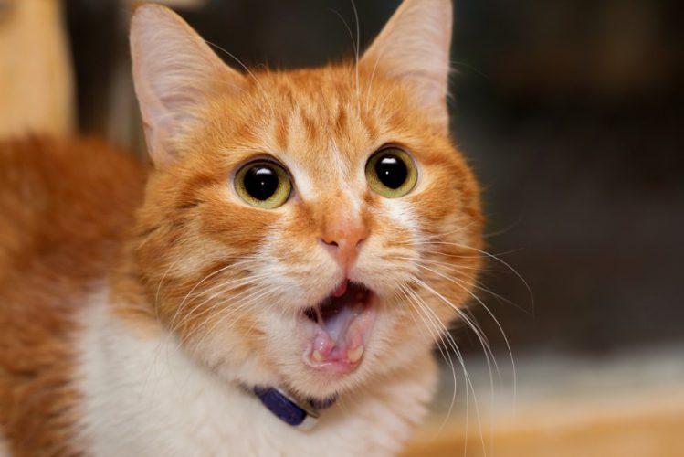 【そんニャばかな!】犬は猫の5倍の愛情表現があるってホント?