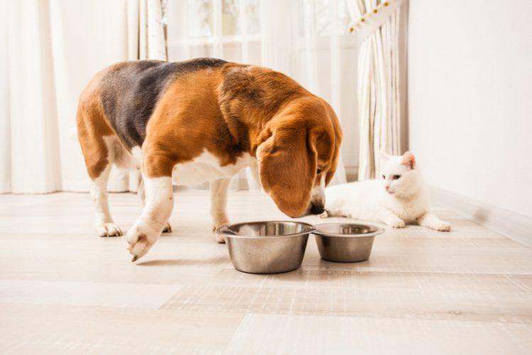 犬が猫のエサをつまみ食いする様子