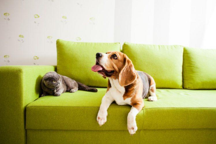 ソファの上でくつろぐ犬と猫