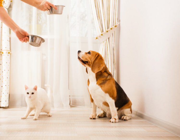 猫にドッグフードはNGな理由って?犬&猫の明確な違い