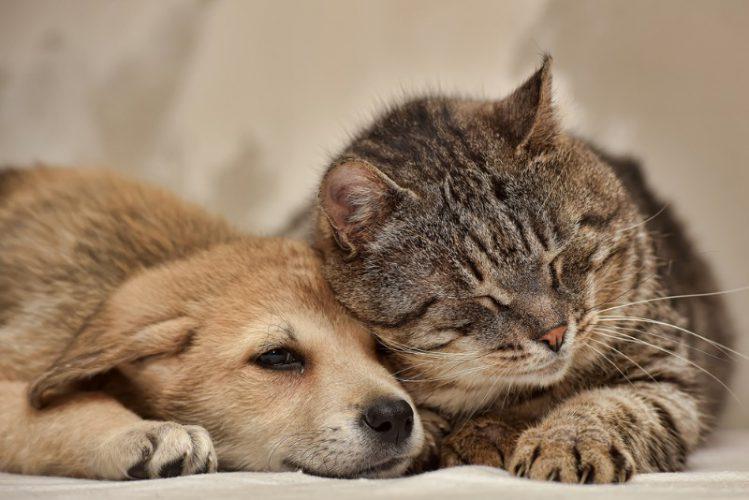 犬に寄り添って眠る猫