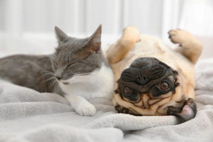 仰向けに寝ている犬と顔を背ける猫