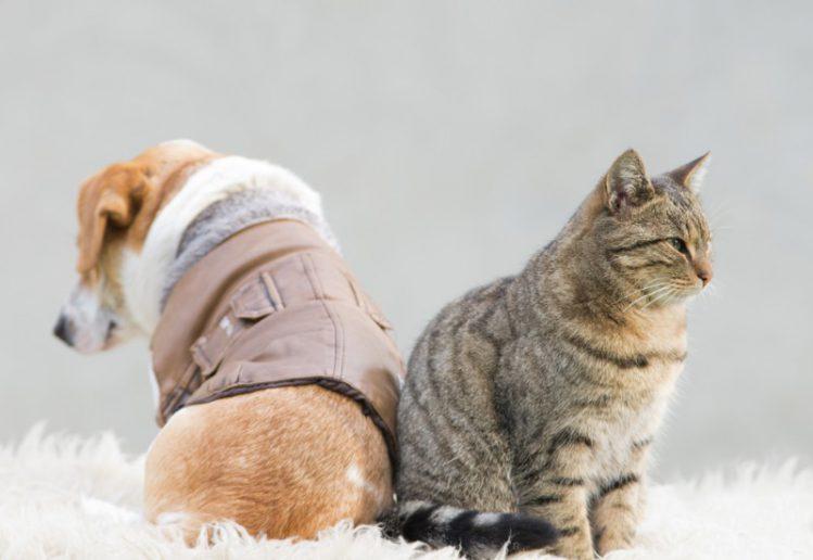 背中合わせに座る犬と猫