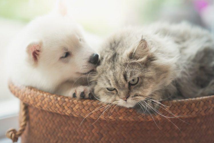そんな意味があるの!?犬と猫の「毛づくろい」事情