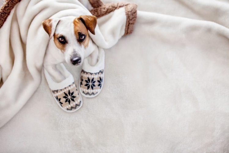 スリッパを履く犬