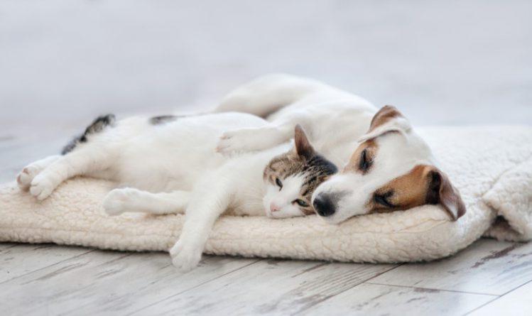 犬と猫は仲良し?!仲良く過ごすコツとそれぞれの性格や習性について