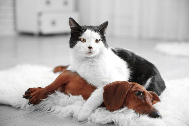 【飼い主あるある】犬と猫の気になるニオイをどうやって対策する?