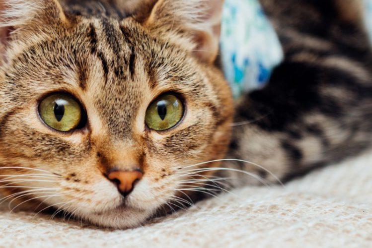 【どうぶつクイズ】このネコ目の動物は、イヌ科?ネコ科?