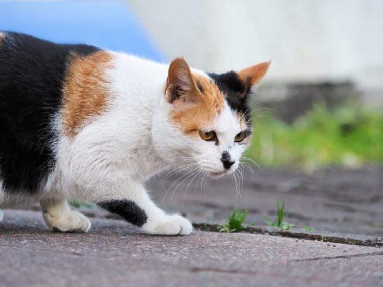 警戒する様子の猫