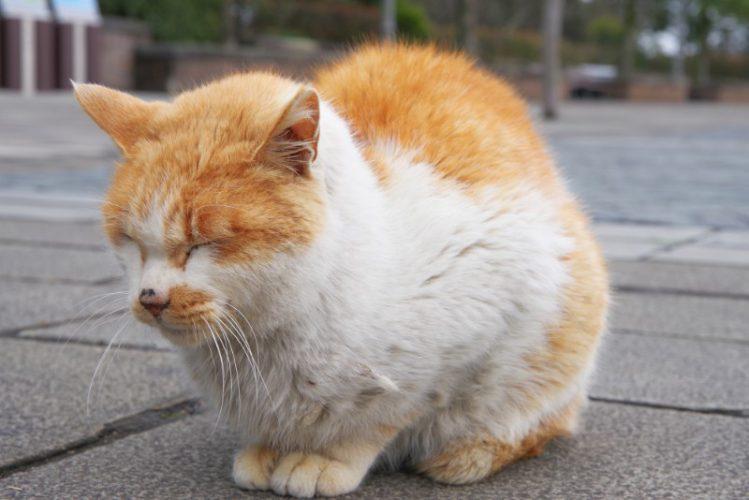 目を閉じて固まる猫